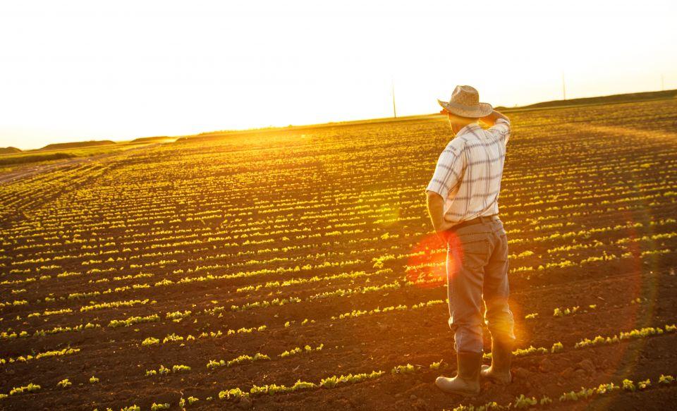 Abogados para reclamar las subvenciones agrarias de la Xunta de Galicia