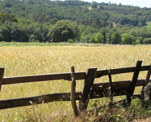 Abogado especialista en lindes y linderos en Galicia